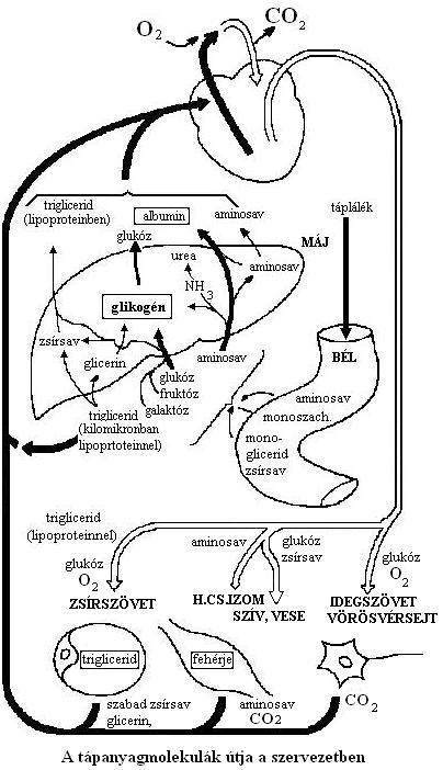 dr martin fogyás pensacola fl alvási pozíciók a zsírvesztéshez
