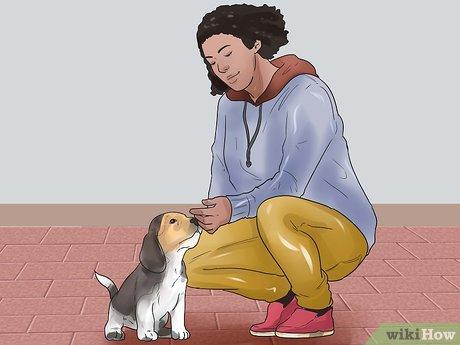 hogyan fogyhat le a beagle