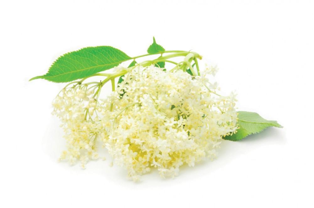 Gyógynövények, melyek segítik a fogyást