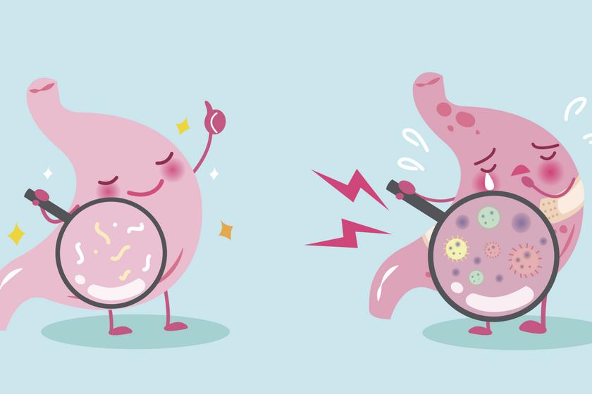 változtassa meg a bélbaktériumokat a fogyás érdekében
