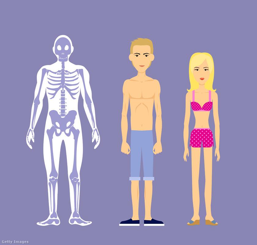 zsírvesztés az endomorf hím esetében