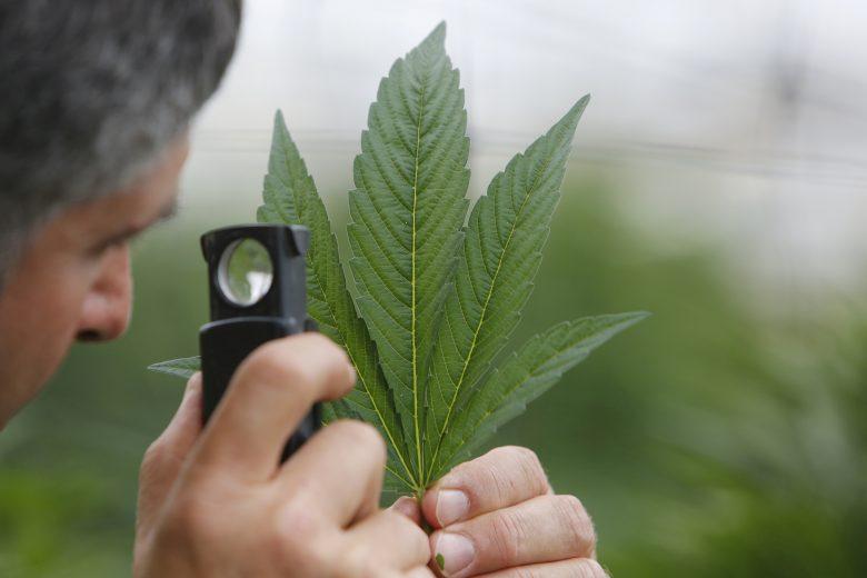 marihuána mellékhatások fogyás