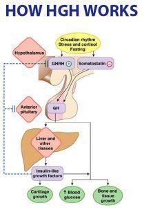 lasix fogyás hogyan lehet eltávolítani a zsírt a bőrből
