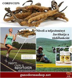 Your Body magazin   BioTechUSA