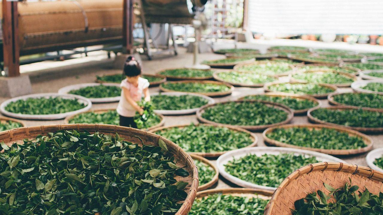 al diafa fogyókúrás tea mellékhatások szerves fogyókúra ph instagram