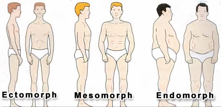 Testtípusok és fogyás, Táplálkozás és edzés testtípus szerint