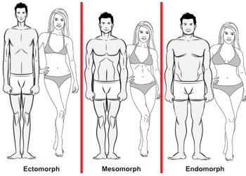 Az ektomorfok könnyen elveszítik a zsírt?. Endomorph diéta étrend