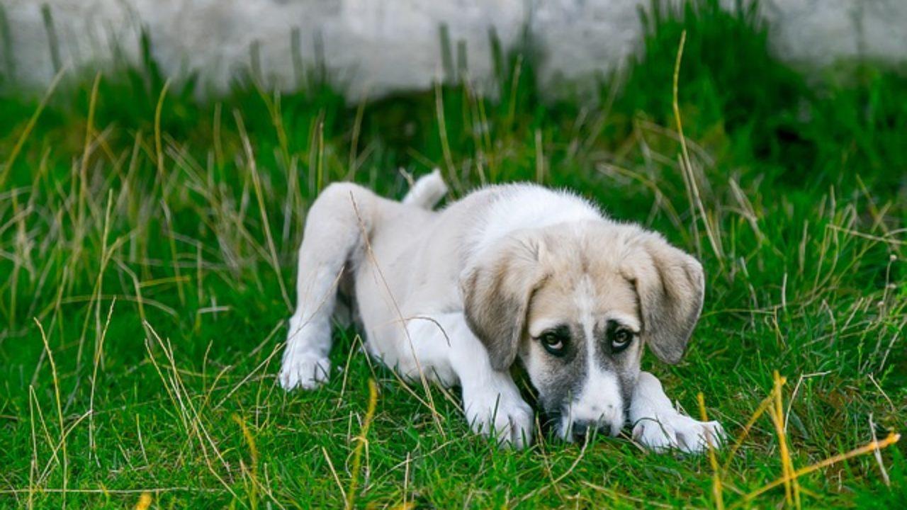 A rák korai felismerése kutyáknál - 12 árulkodó jel