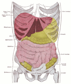 Elveszíti az alsó oldalsó zsírt - Csökkentse a hasa zsír