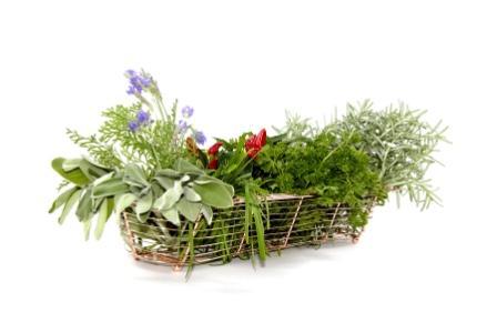 zsírégetést természetes gyógynövényekkel milyen hamar fogyhatok