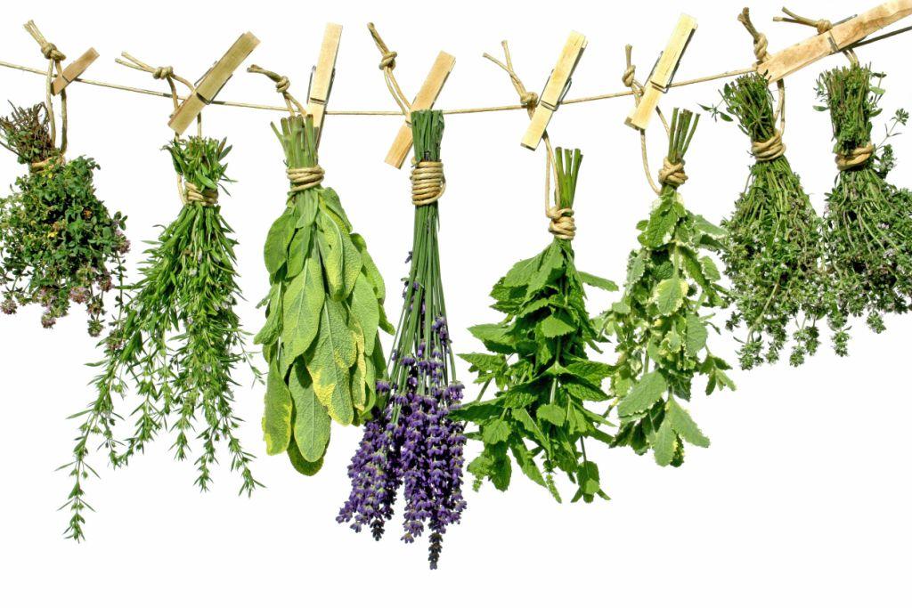 Gyógynövények fogyáshoz - ezeket ajánlja Szabó Gyuri bácsi