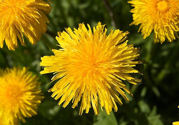 sárga zsírégető