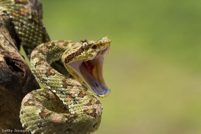 Lovagolni a kígyó fogyás - garembucka.hu