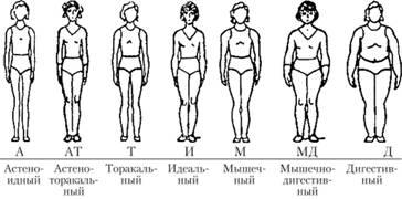 Az endomorf testalkat és a zsírégetés III.