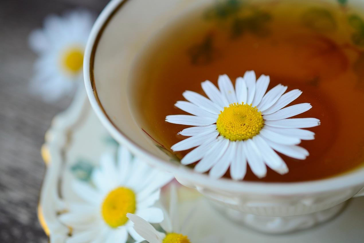 Kamilla tea éjjel fogyni. A zöld tea előnyei, hogy gyorsan lefogy