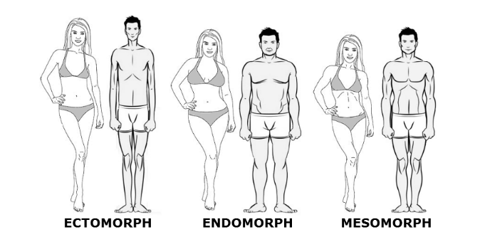 Testalkat típusok szemmel nem látható különbségeit mutatjuk meg