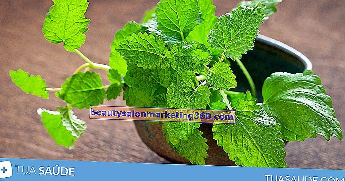 Lila bazsalikom - előnyök, ellenjavallatok, illeszkedés és gondoskodás - Gyümölcslevek