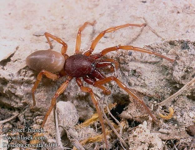 fogyás pók harap