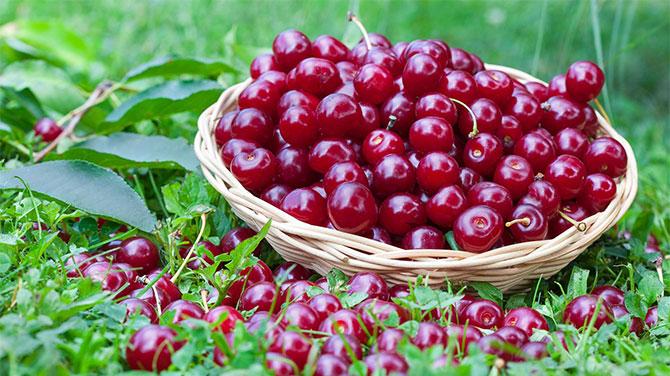 a cseresznye fogyás előnyei