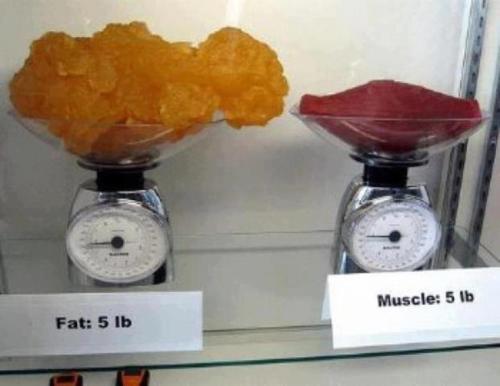 zsírégető hatása